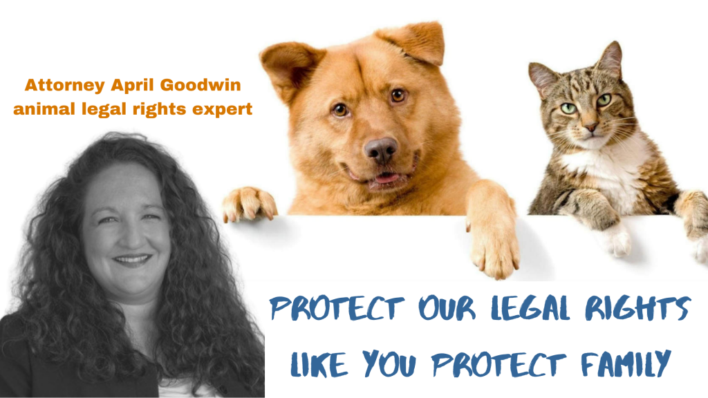 Attorney April Goodwin animal legal rights expert