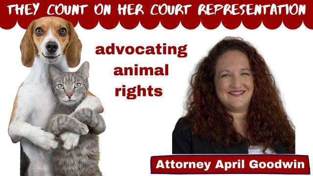Pet count on April Goodwin court representation